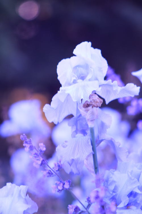 Бесплатное стоковое фото с Колокольчик, красивые цветы, природа, роза
