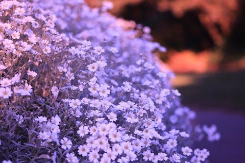 Бесплатное стоковое фото с белый цветок, ванкувер, красивые цветы, природа