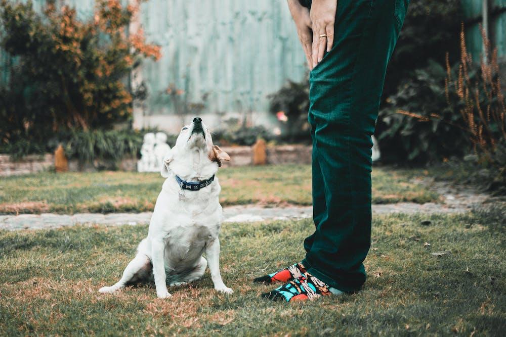 Dog @pexels.com