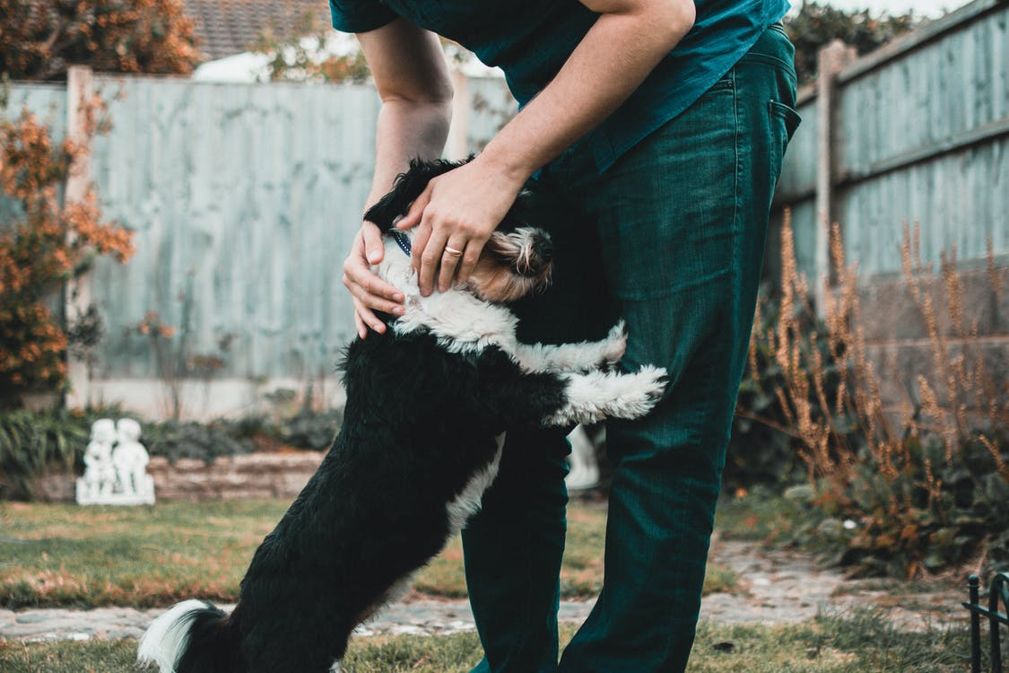 Person Holding Black And White Dog