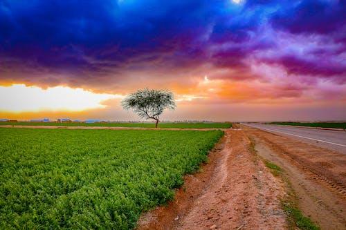 Foto stok gratis alam, awan, bidang, Fajar