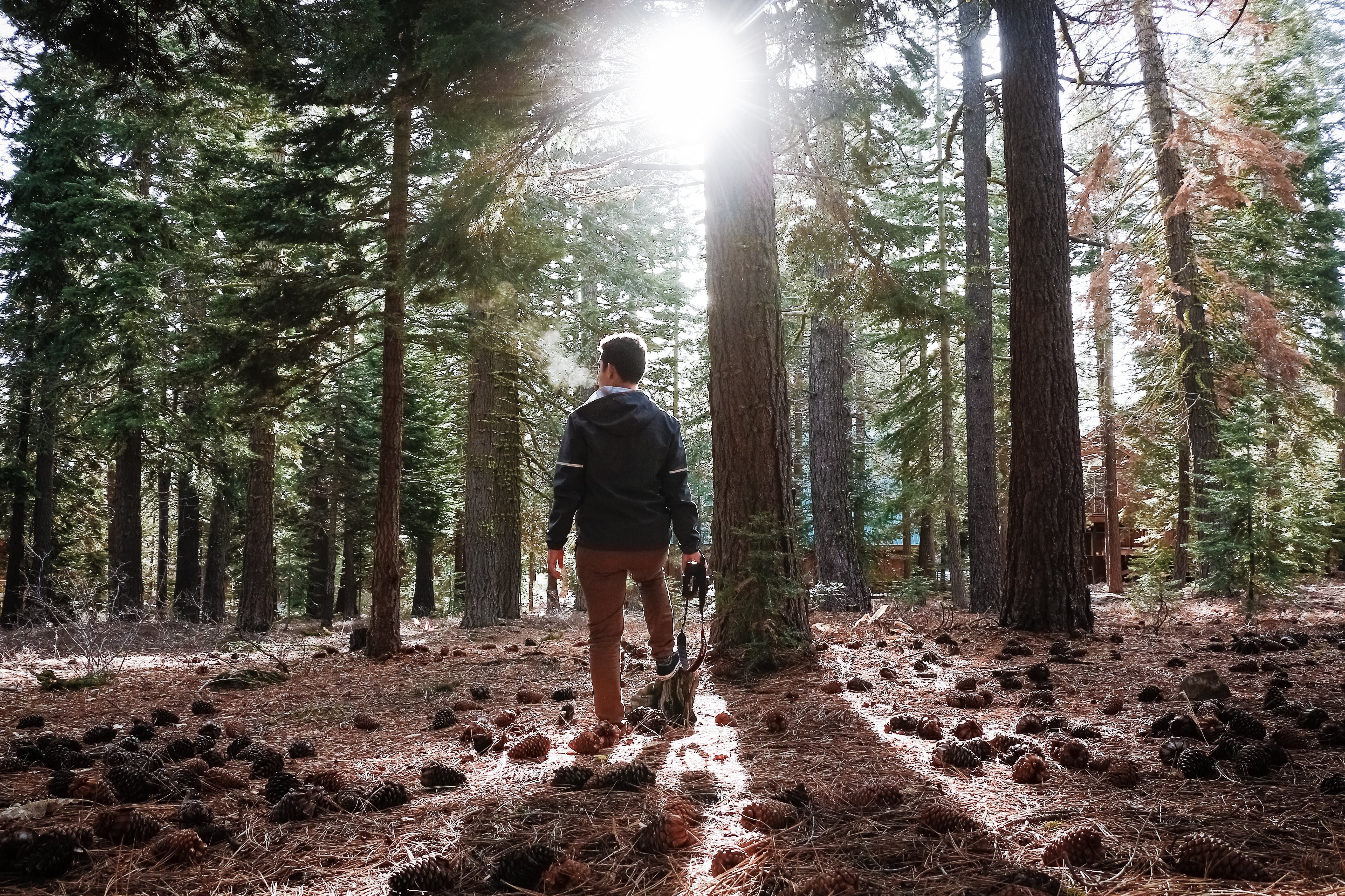 Free stock photo of forest, nature, photography, pines