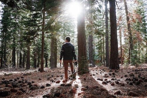 Gratis stockfoto met bomen, boom, Bos, bossen