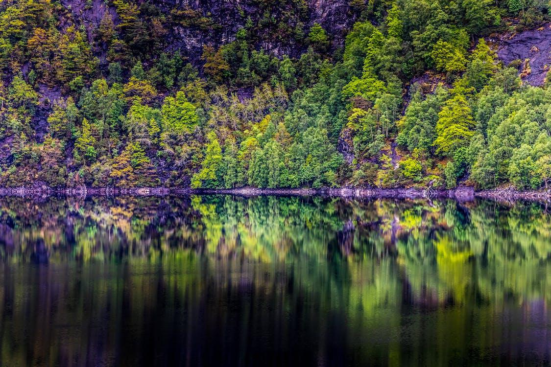 a orillas del lago, agua, agua clara