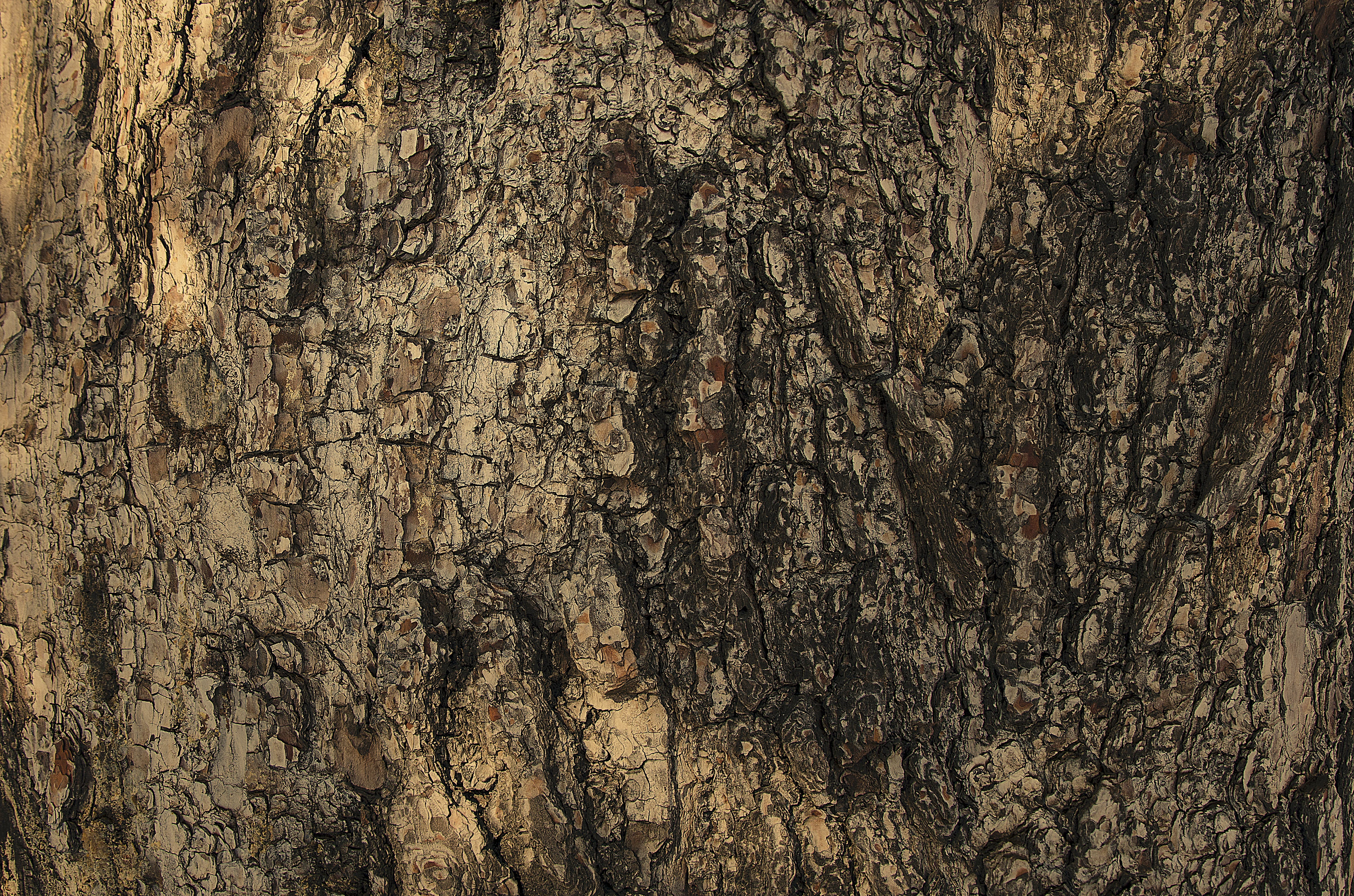 Free stock photo of brown, close, texture, tree