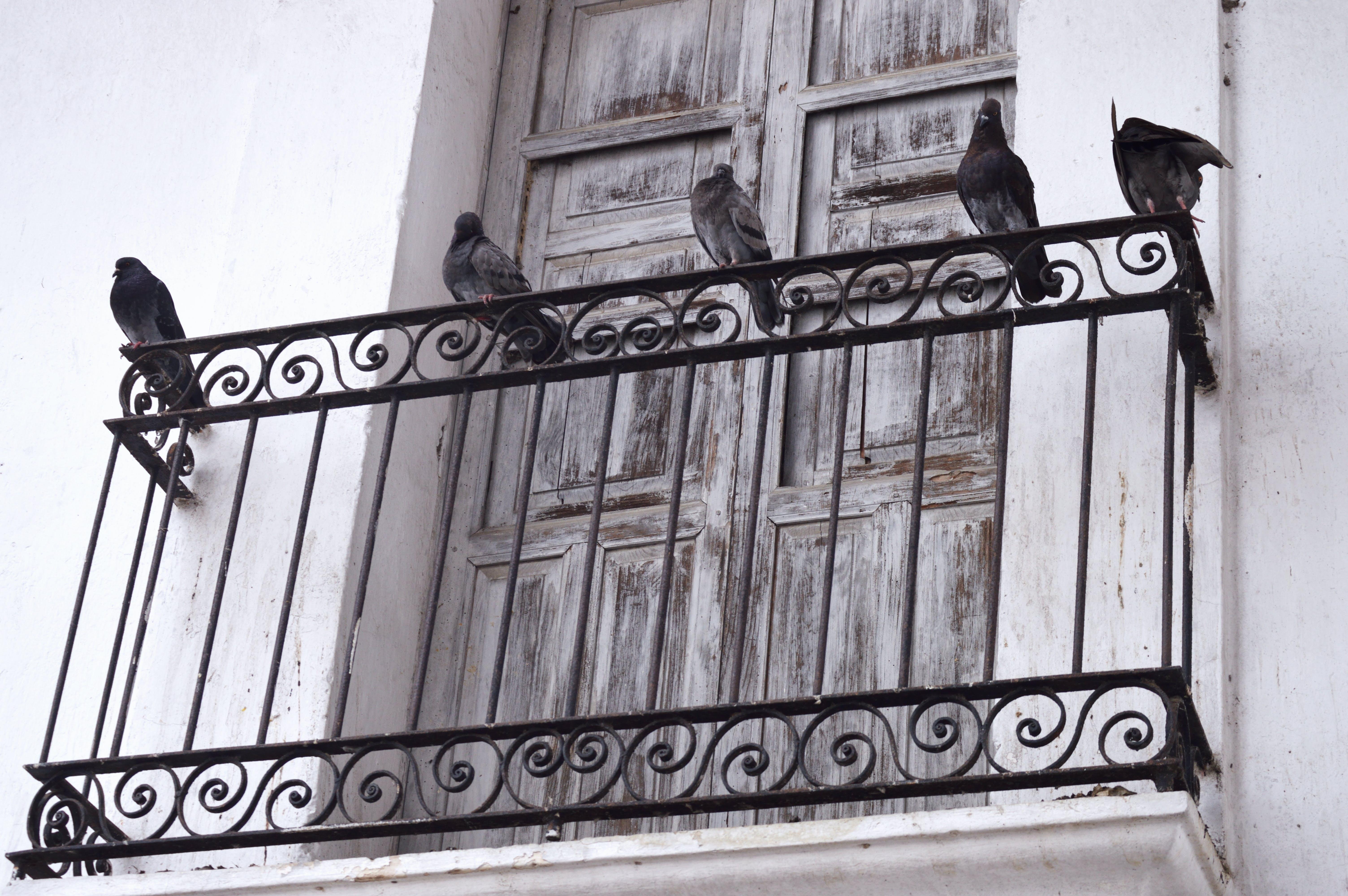 aile, balkon, bina, dar açılı çekim içeren Ücretsiz stok fotoğraf