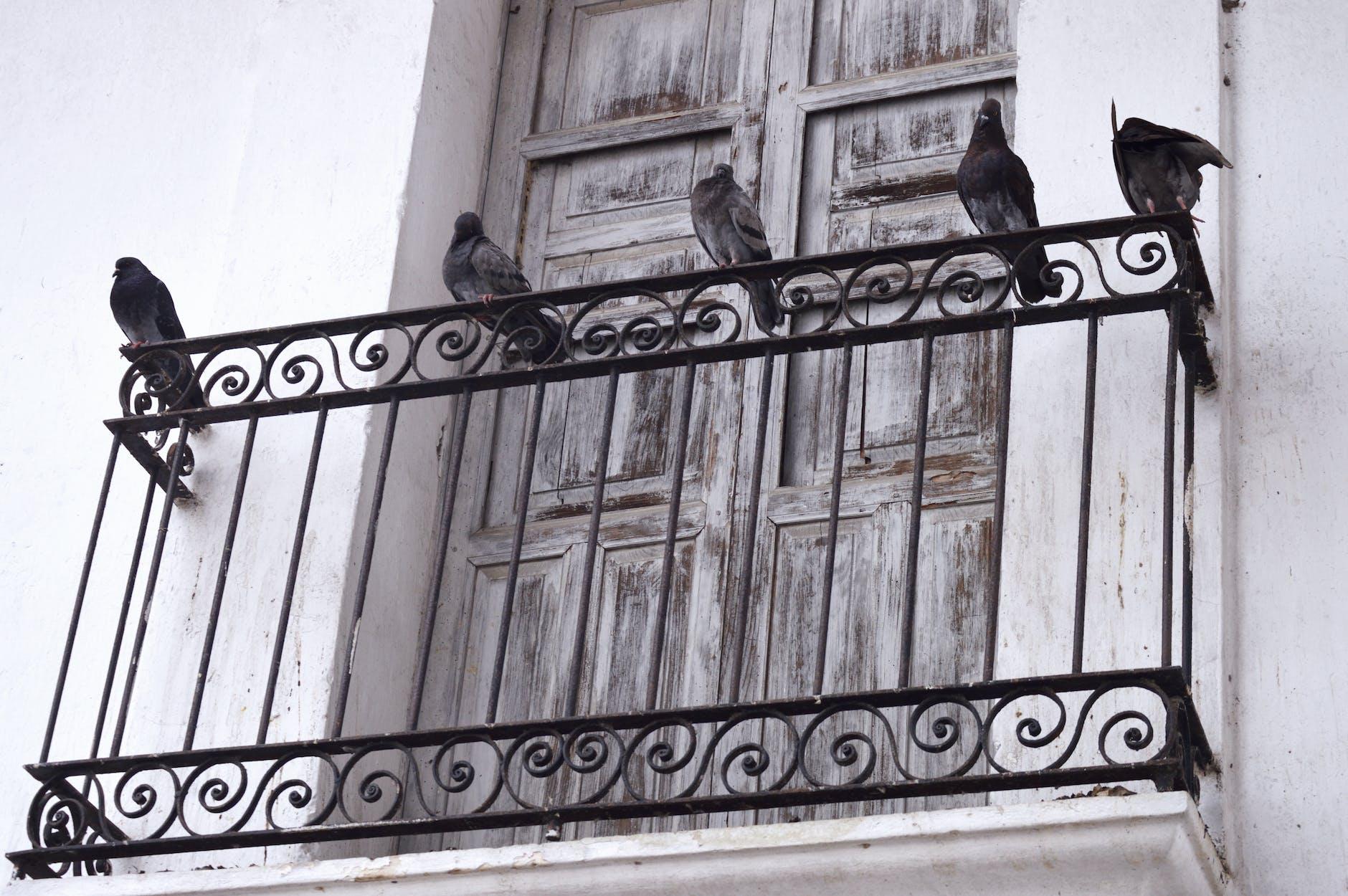 Як привабити птахів на власний балкон?