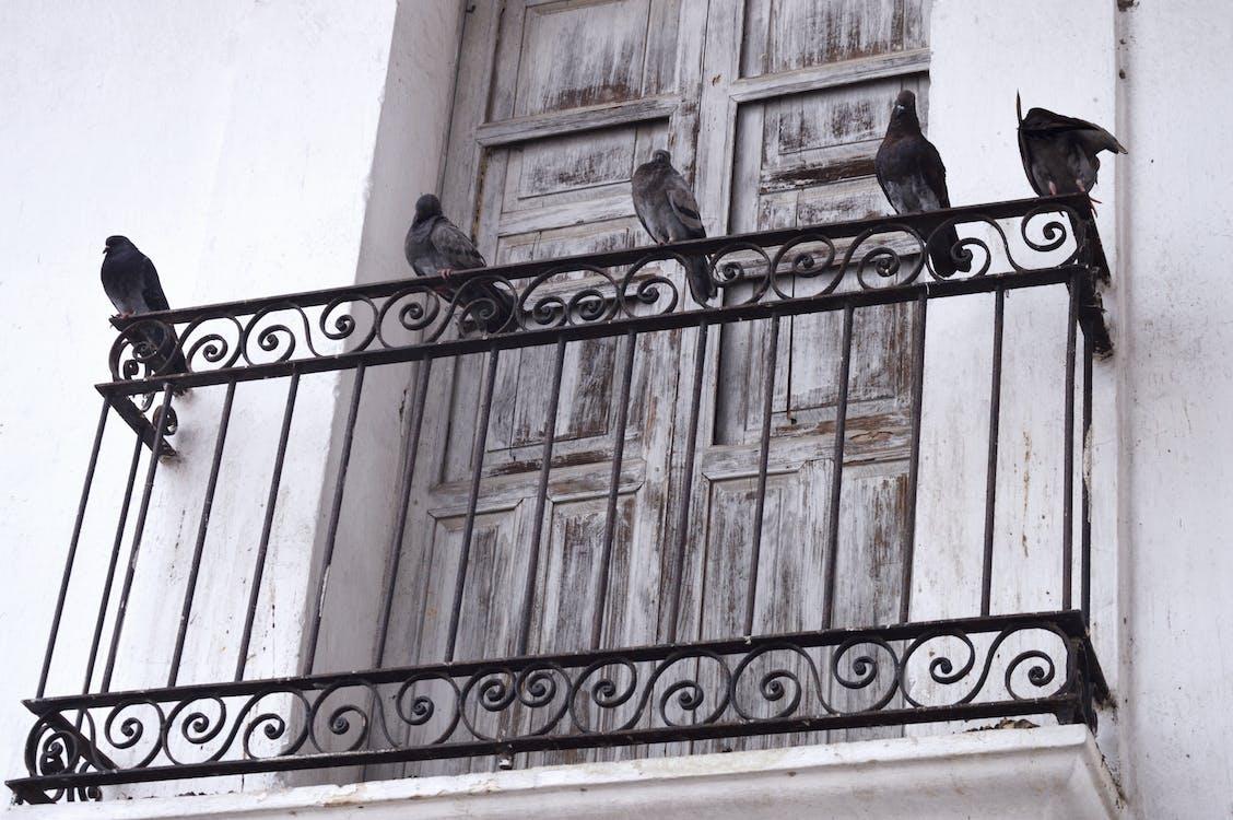 al aire libre, alas, animales