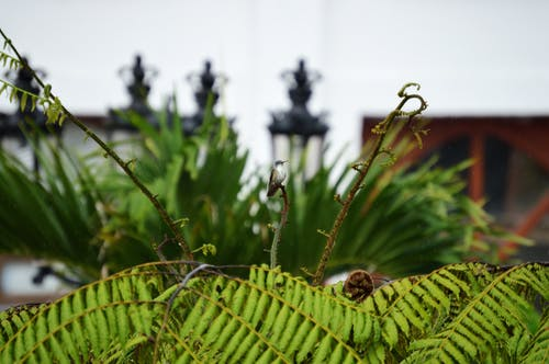 Fotografía De Enfoque De La Planta De Helecho Verde