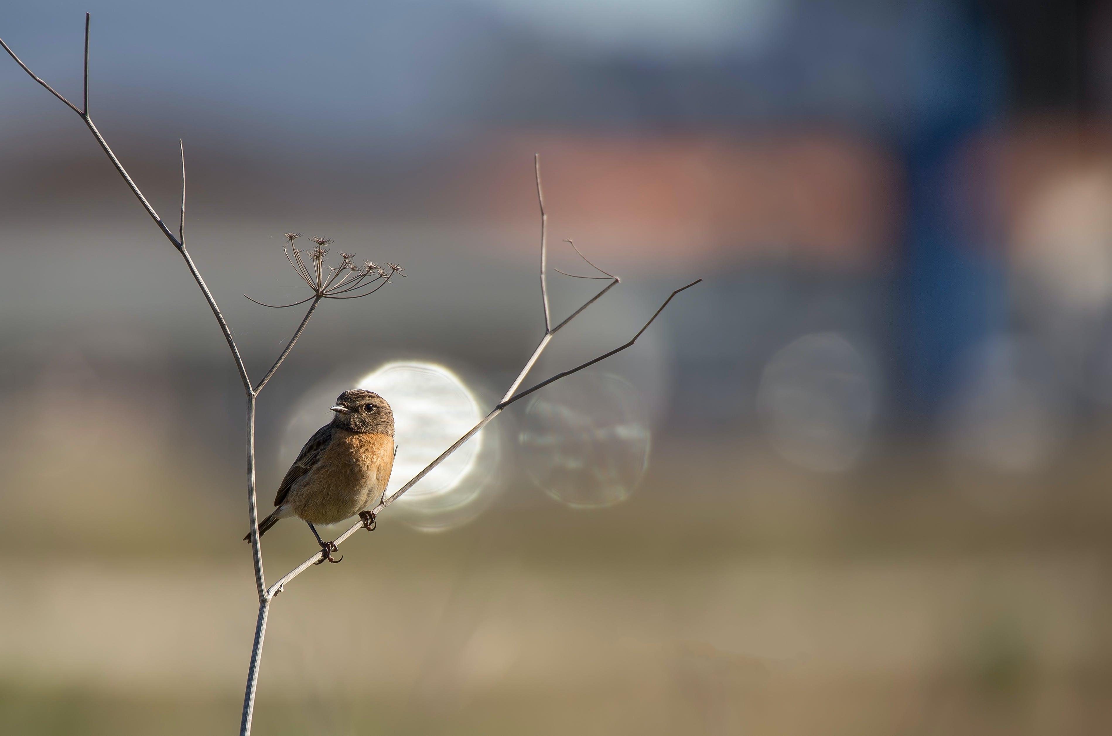 Free stock photo of bird, nature photography