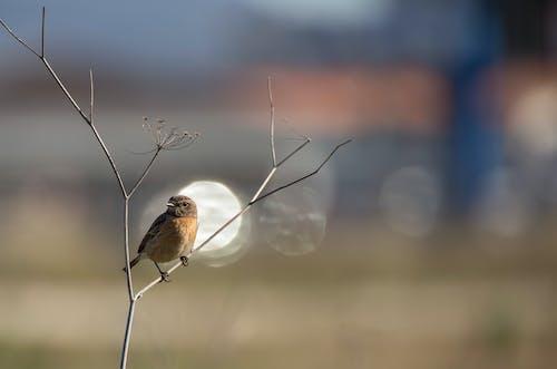 Photos gratuites de photo de nature