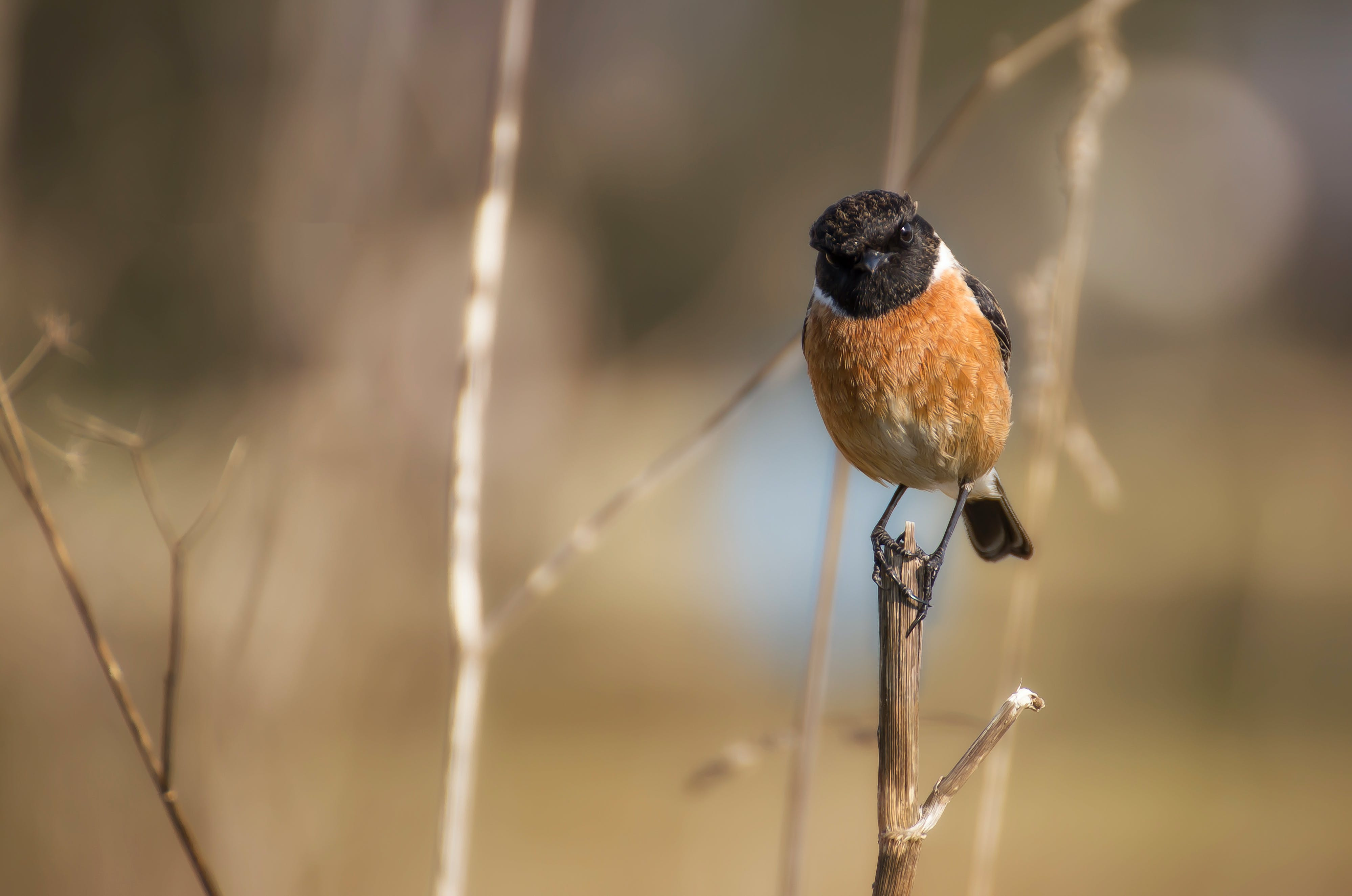 Brown Black Bird on Twig during Daytime
