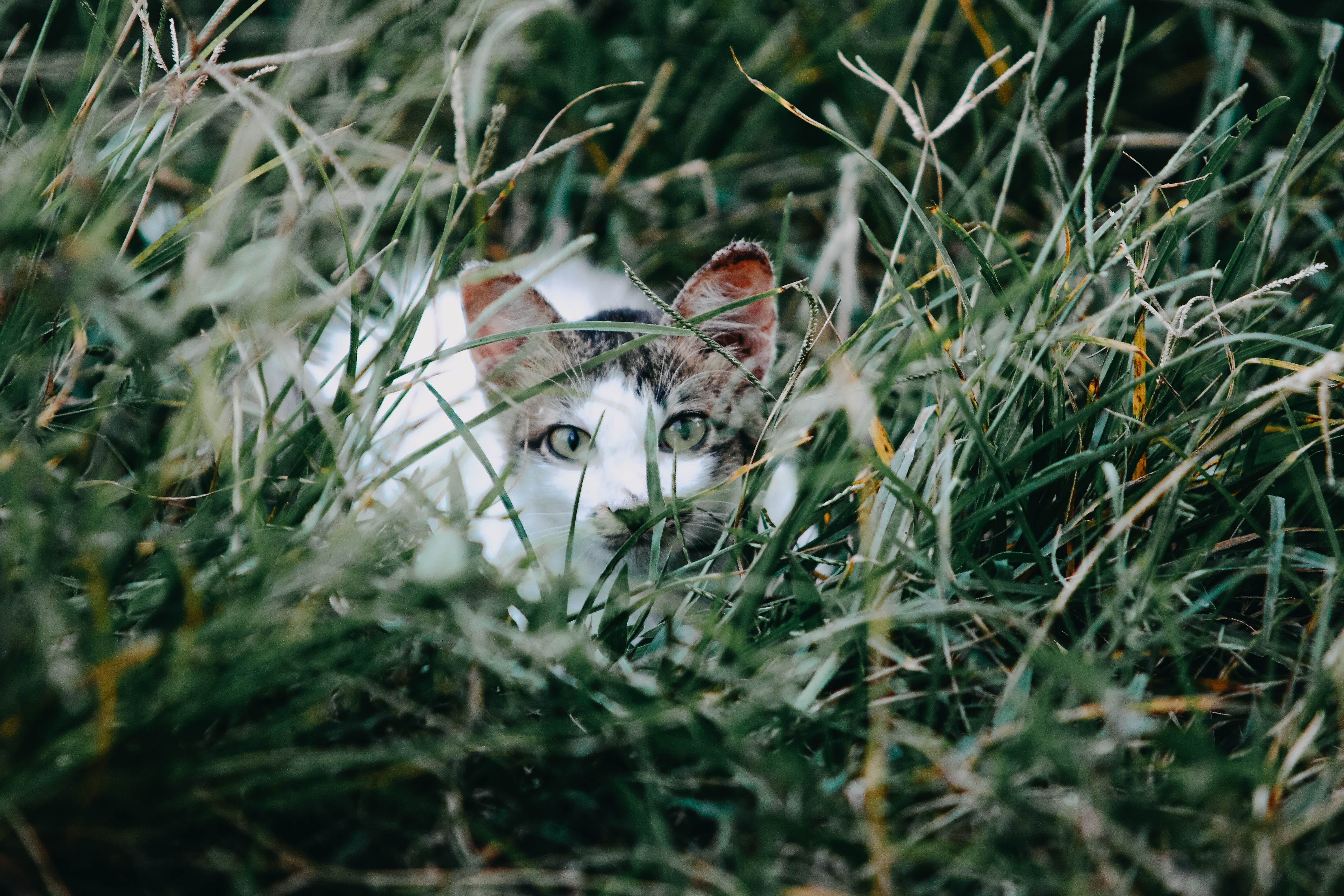 White and Gray Cat Lying on Green Grass Field