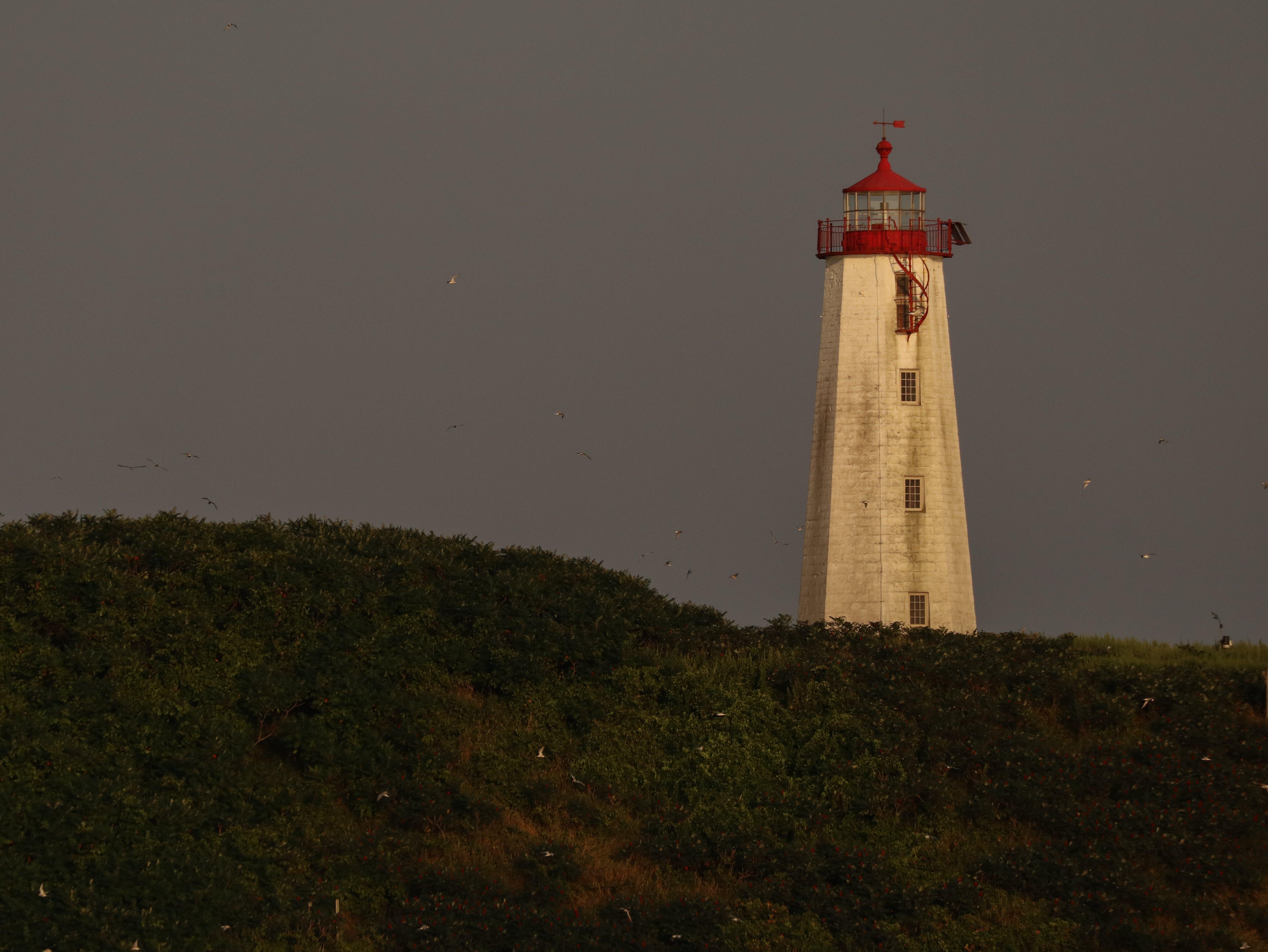 Free stock photo of Falkner Island, light, lighthouse