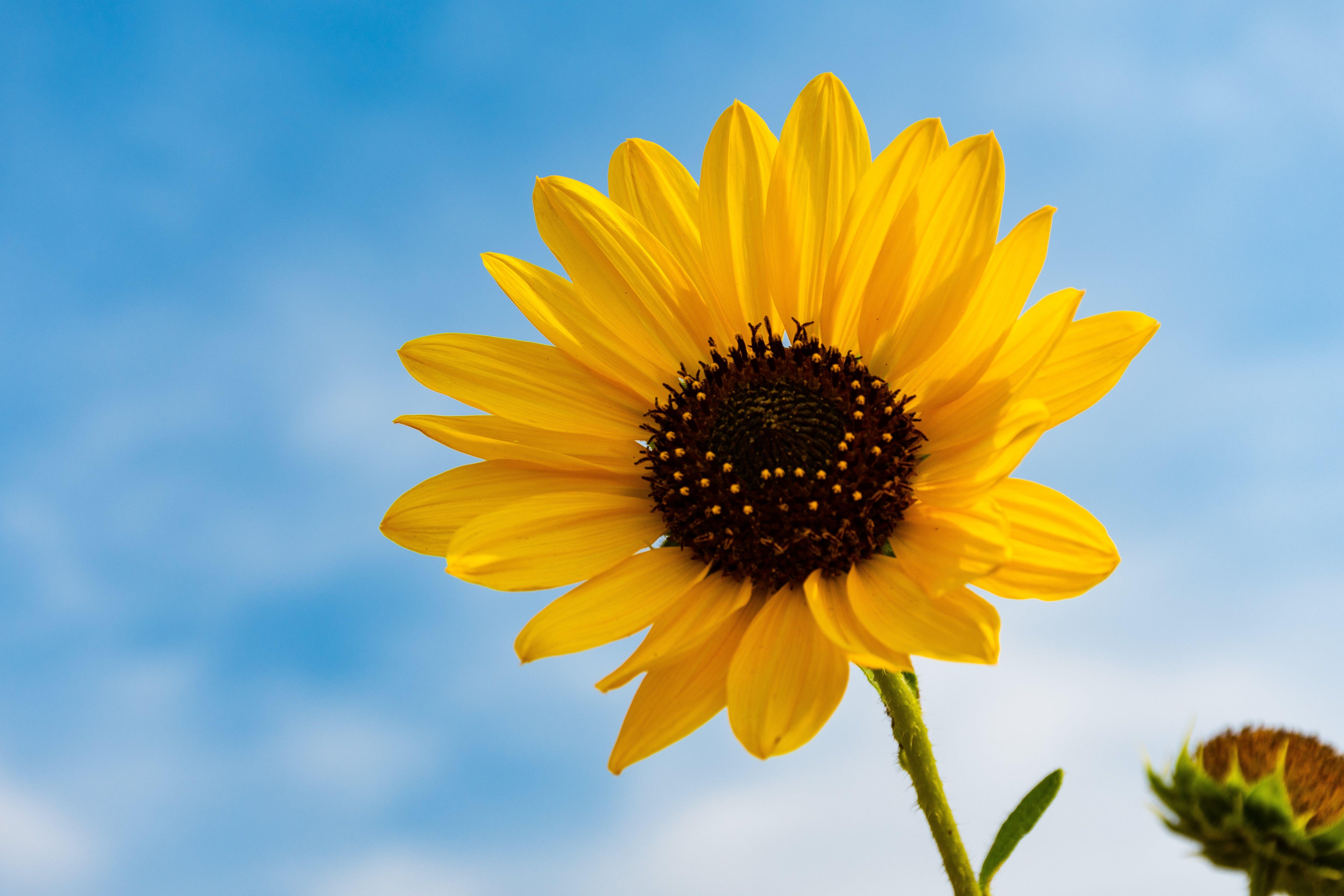 Základová fotografie zdarma na téma flóra, HD tapeta, květina tapeta, kytka