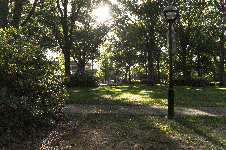 Free stock photo of forest, nostalgic, park, sun