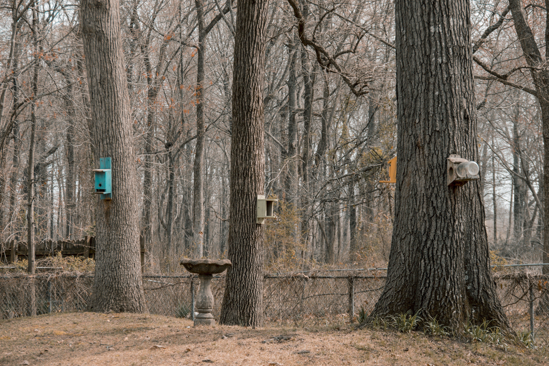 Free stock photo of case of birds, trees