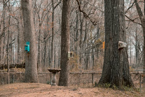 樹木, 鸟的情况 的 免费素材照片