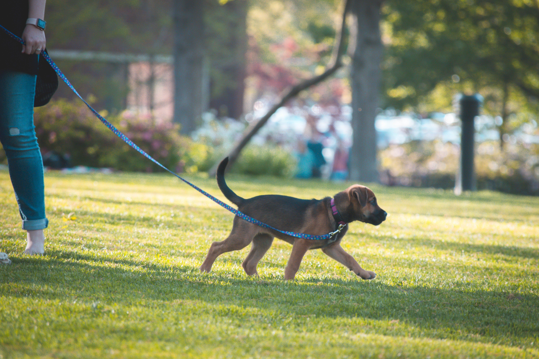 Free stock photo of dog, park, sunset, walk
