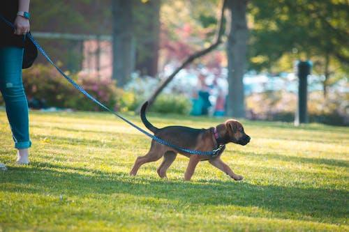公園, 日落, 狗 的 免费素材照片