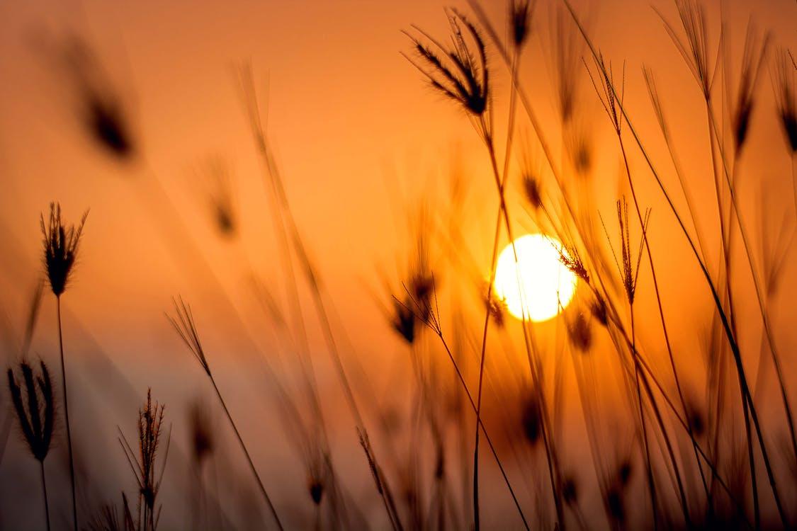 Fotografia Di Silhouette Di Erba