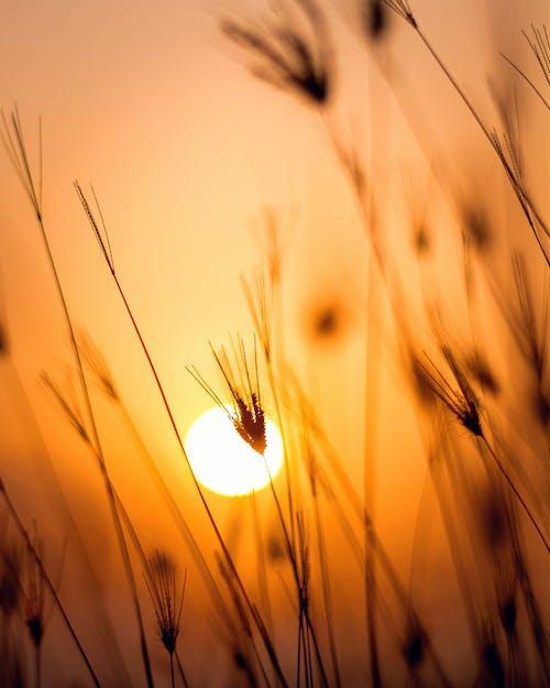 alan, çim, çimen, gün batımı içeren Ücretsiz stok fotoğraf
