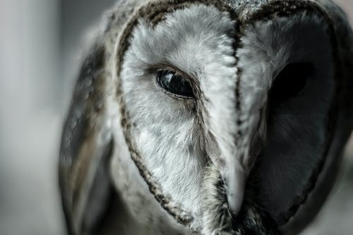 Close-Up Photo of Owl