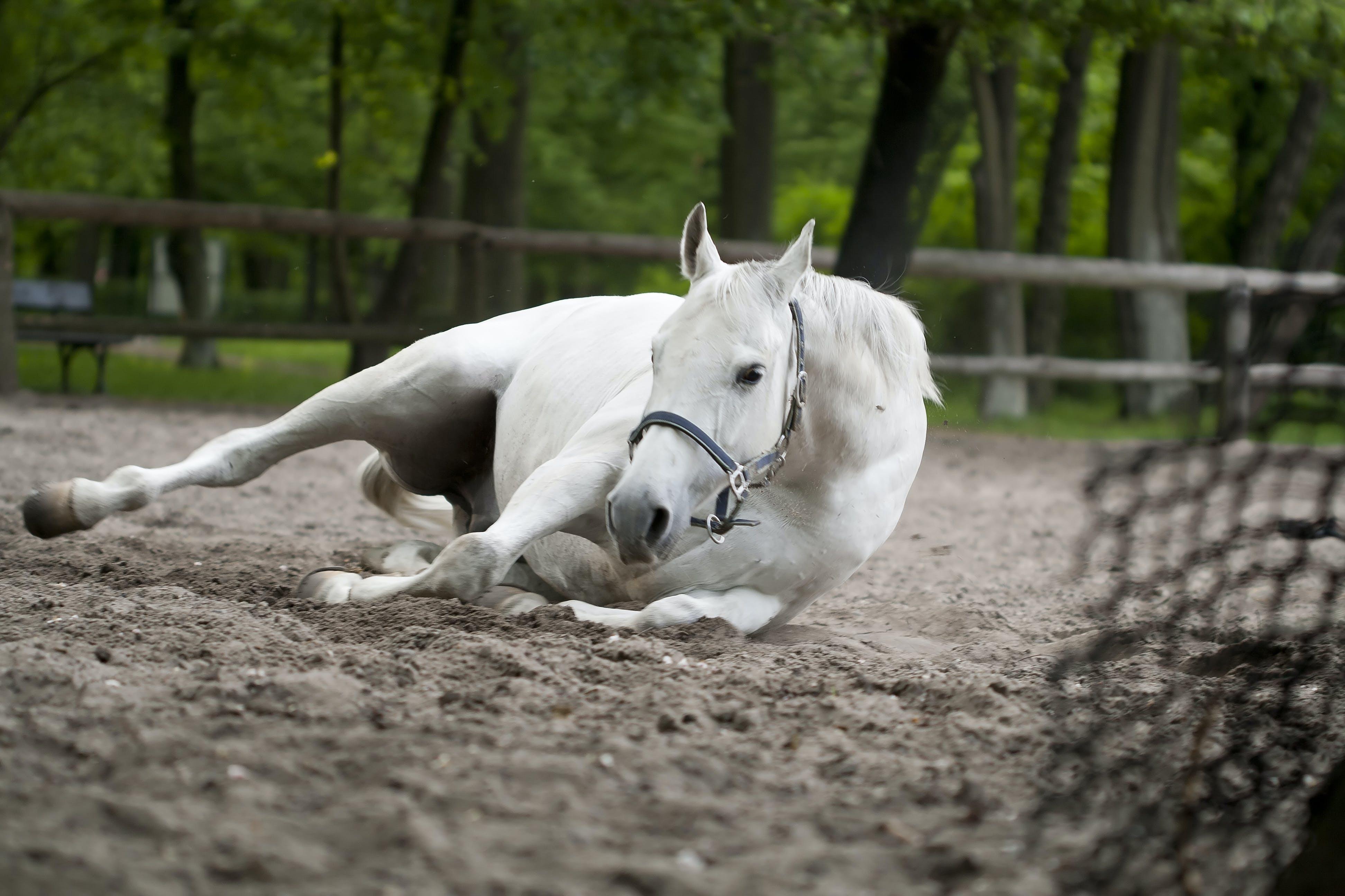 Immagine gratuita di animale, animale domestico, bestiame, carino