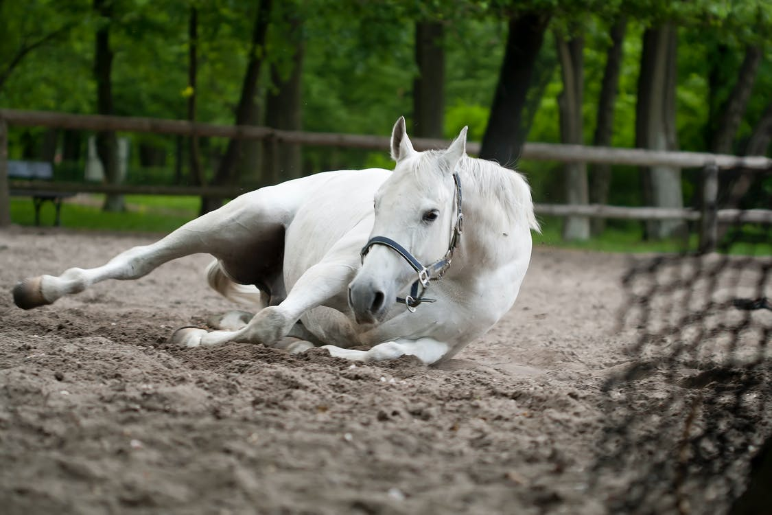 Selective Focus Photography of White Horse Laying on Ground