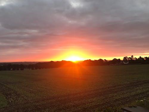 Foto stok gratis matahari terbit, pertanian, peternakan