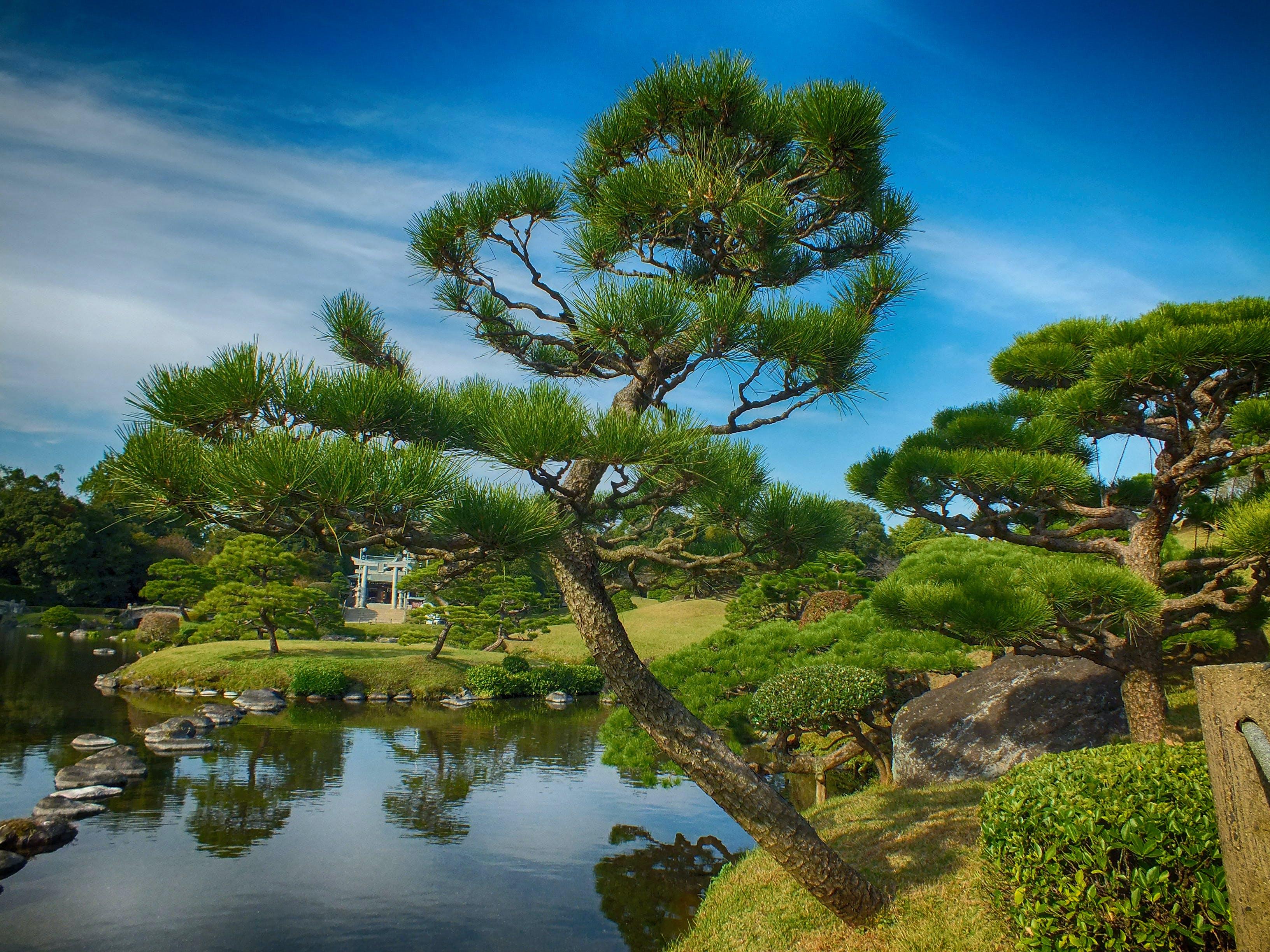 Free stock photo of japan, nature, park, trees