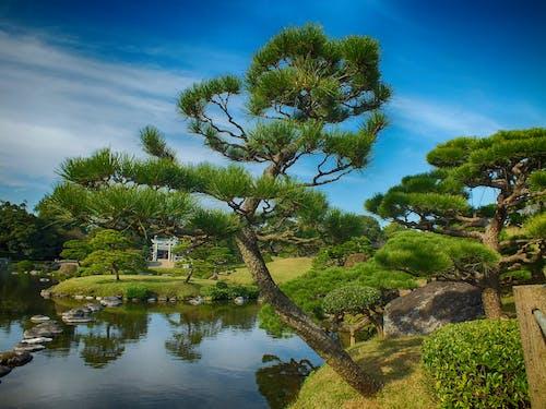 Gratis lagerfoto af japan, natur, park, træer