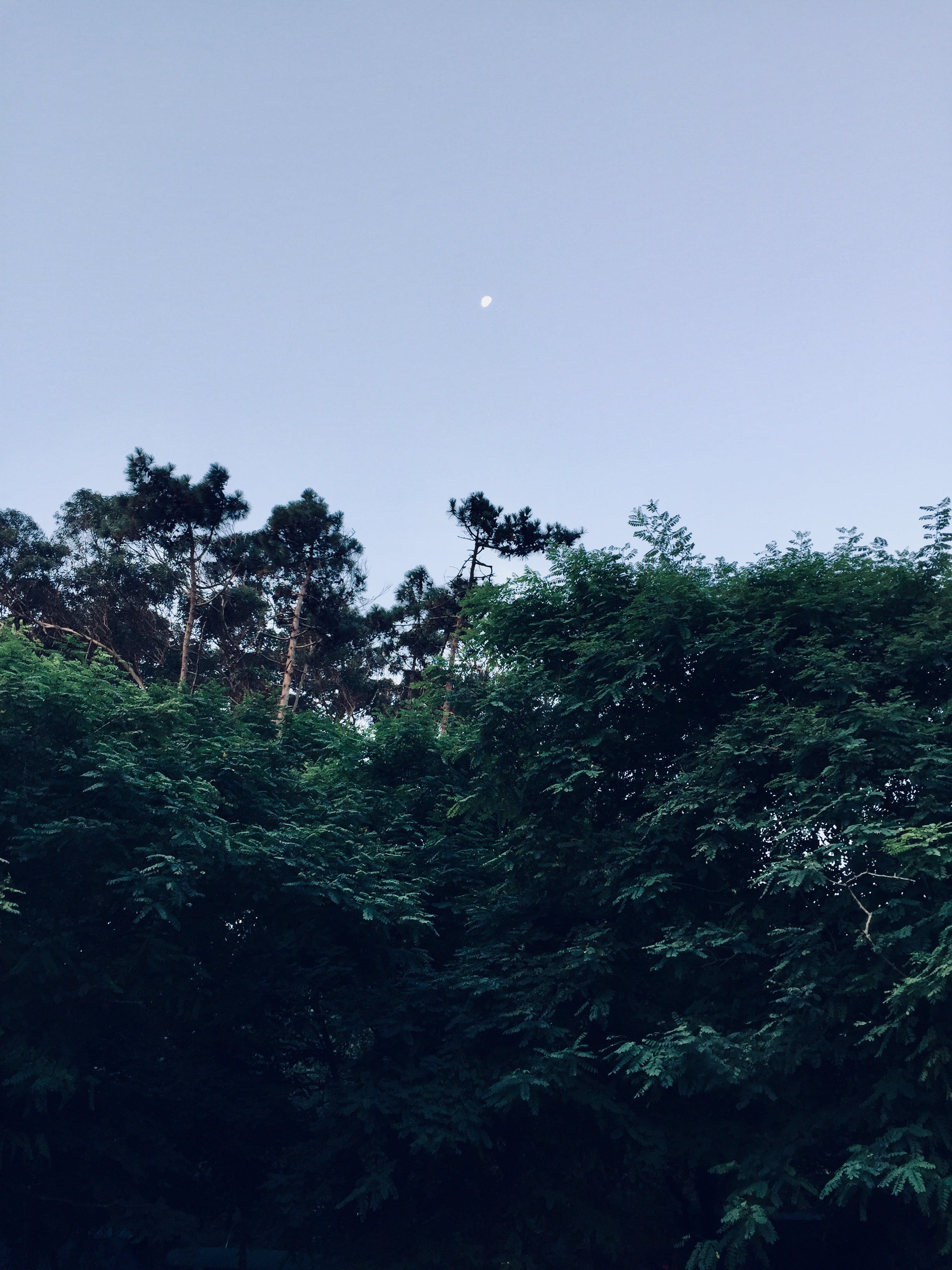 Free stock photo of forest, moon