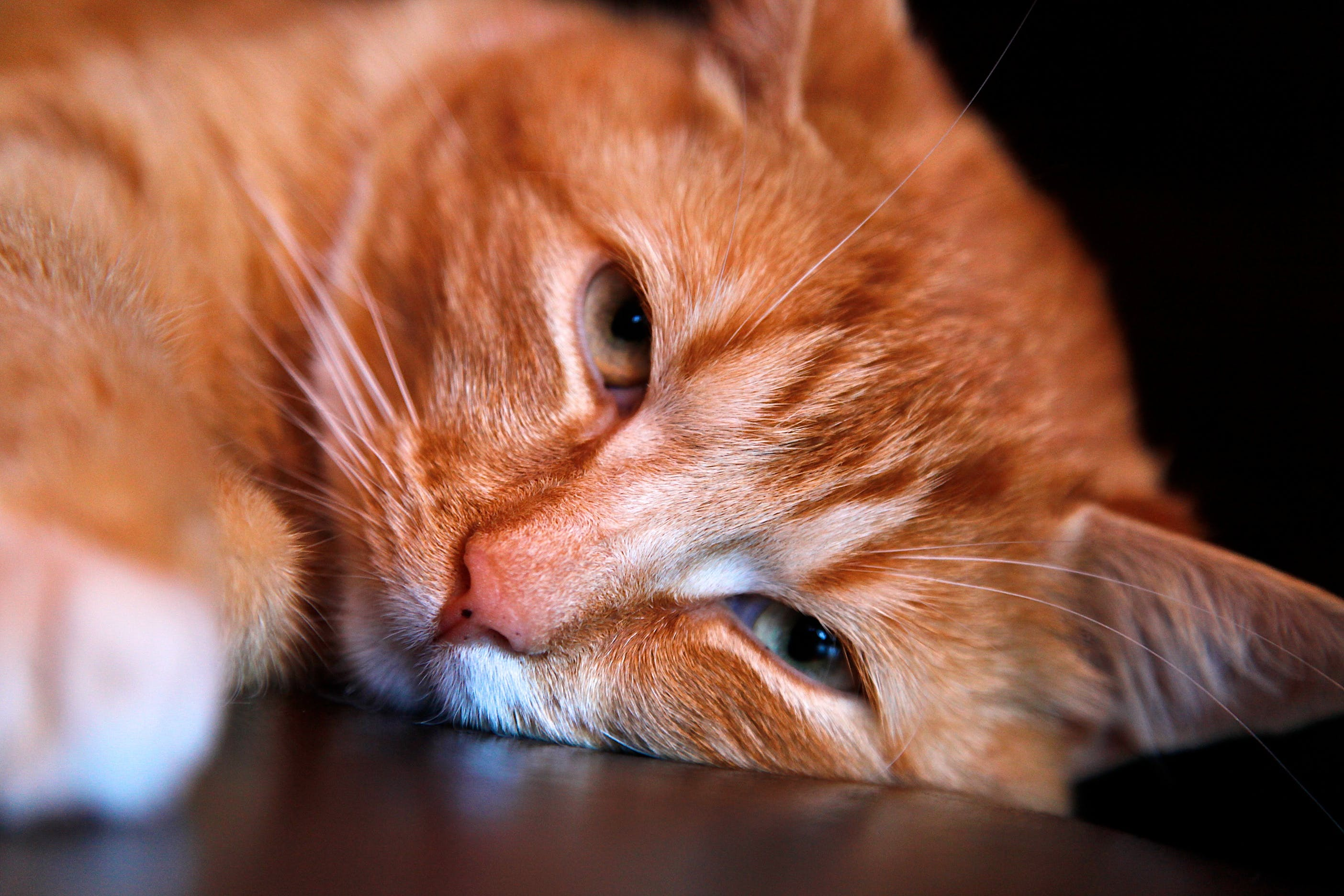 Orange Tabby Cat Leaning Head on Brown Surface