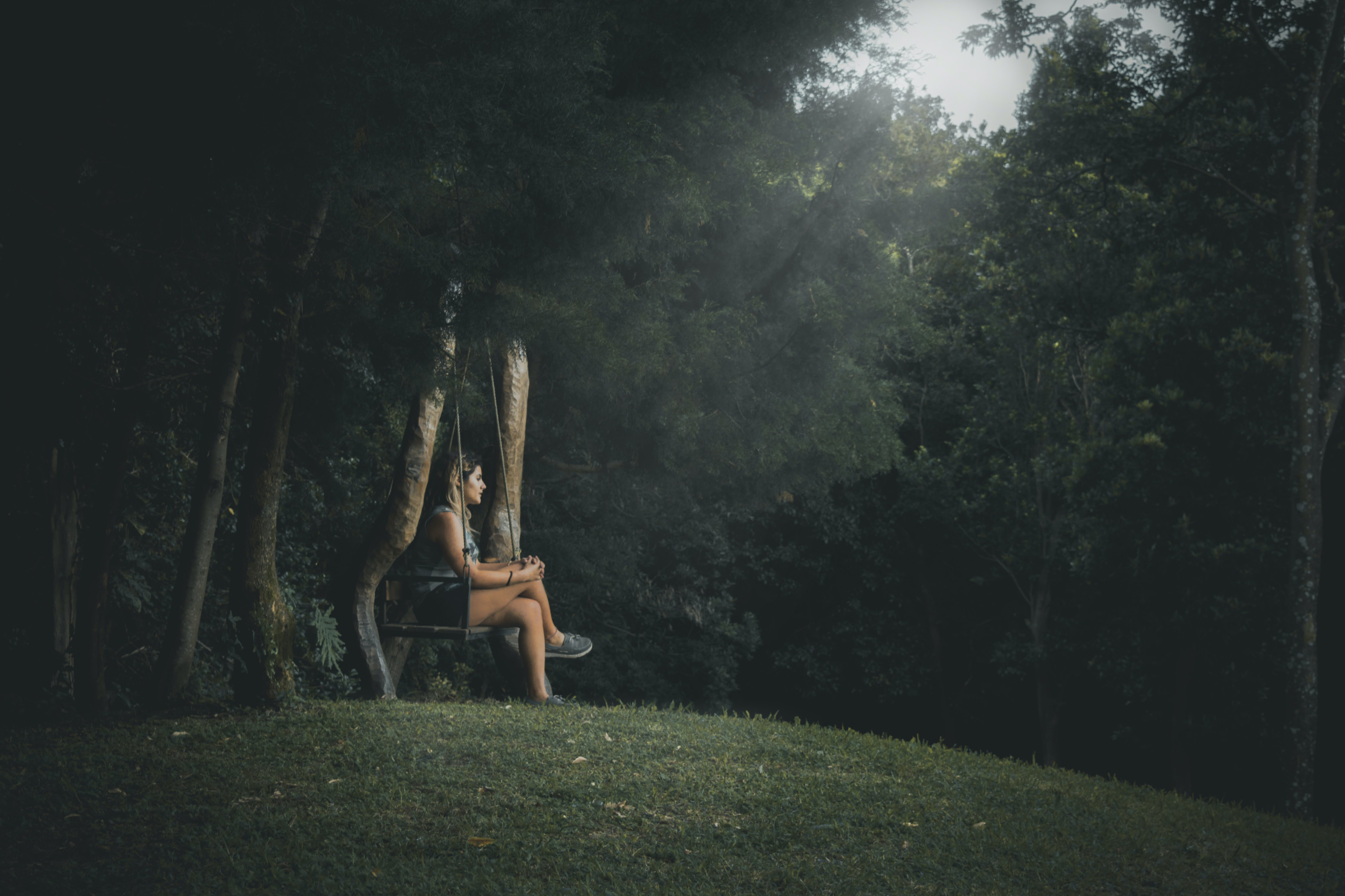 Free stock photo of forest, hope, inspiration
