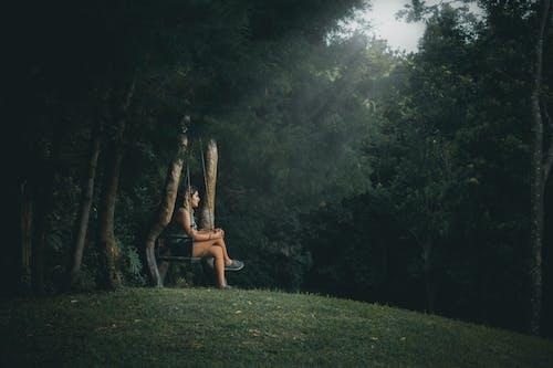 希望, 森林, 靈感 的 免费素材照片