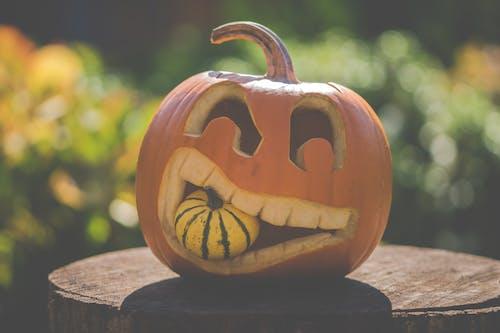 Fotobanka sbezplatnými fotkami na tému bludička, Halloween, október, patizón