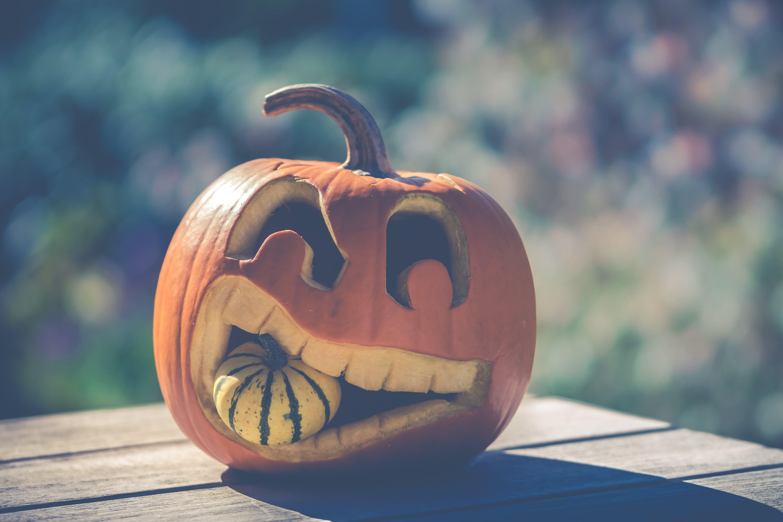 Free stock photo of autumn, autumn decoration, halloween, october