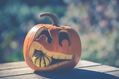 Free stock photo of autumn decoration, halloween, october, orange color