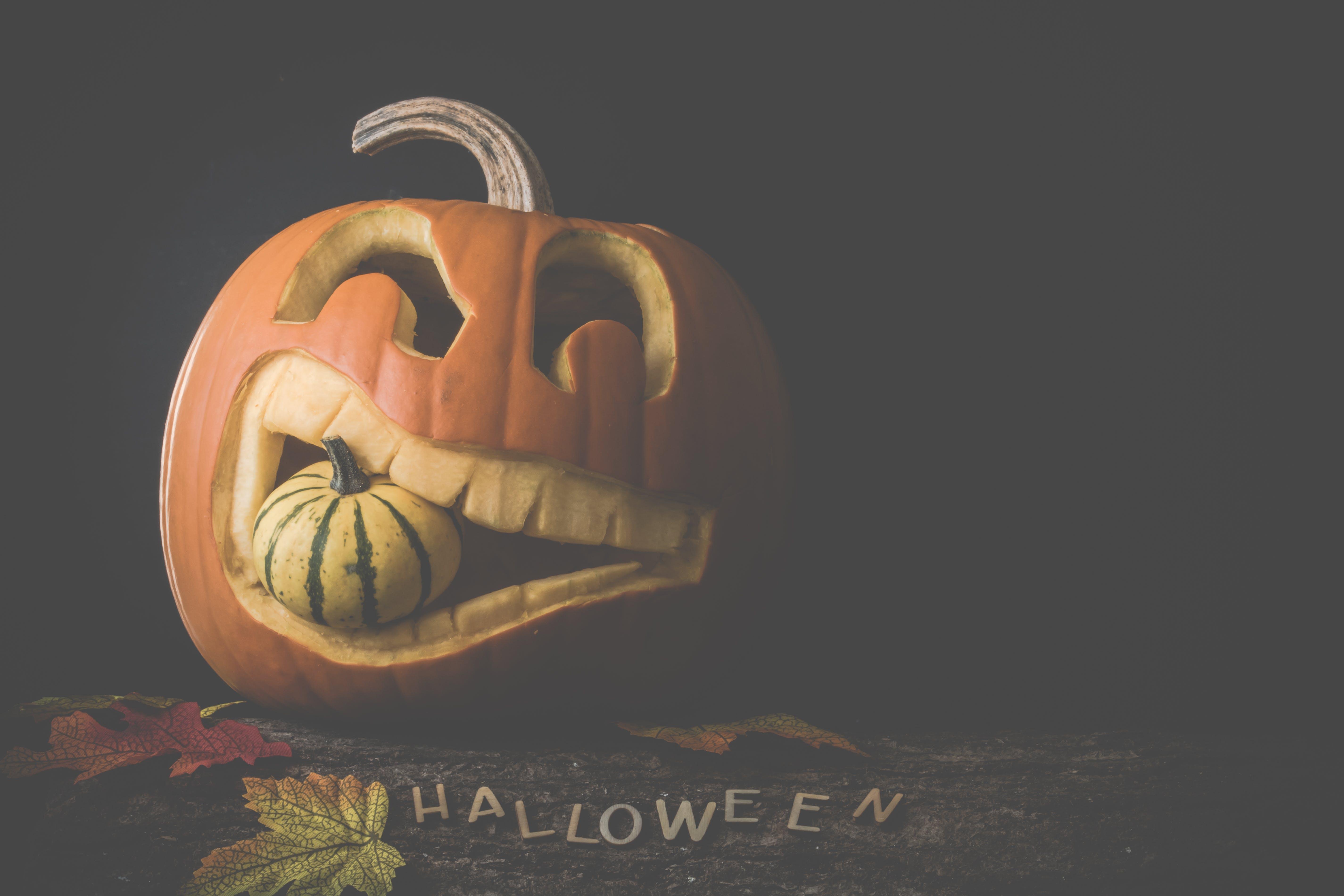 Základová fotografie zdarma na téma dýně, halloween, podzimní dekorace, stlačit