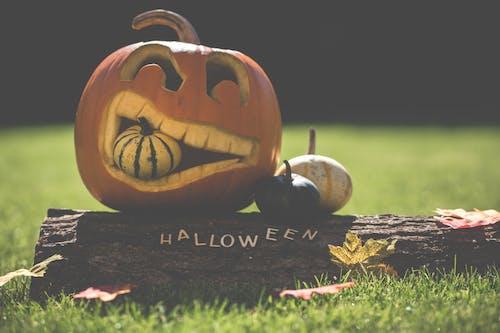 10月, アート, かぼちゃ, ツリーログの無料の写真素材