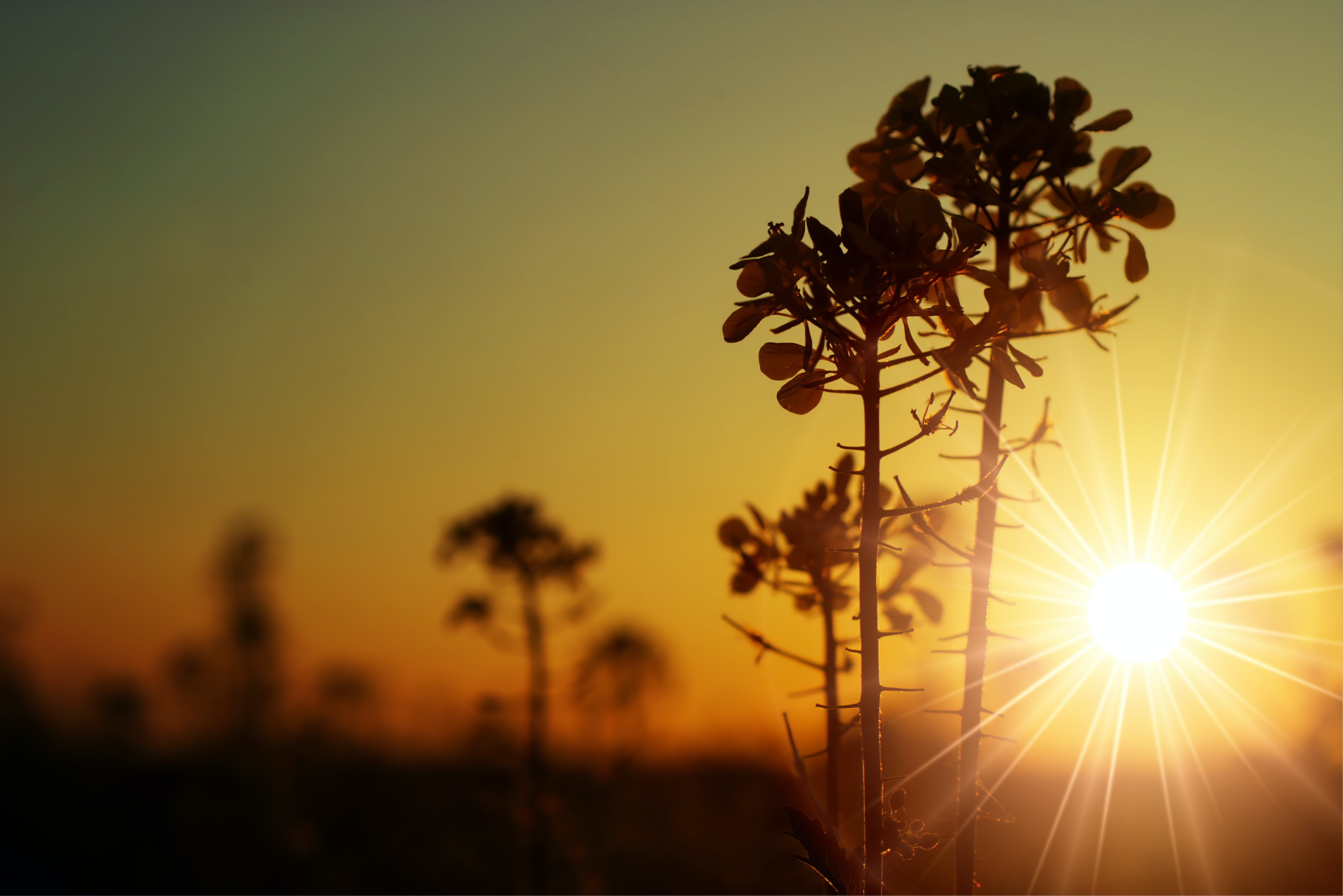 Silhouette Photo of Green Leafed Plant
