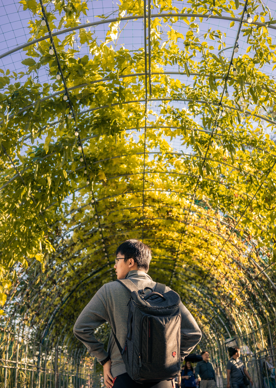 Man Walking on Leafed Tunnel