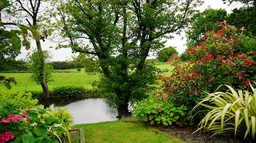 Fotos de stock gratuitas de agua, arboles, campo, césped