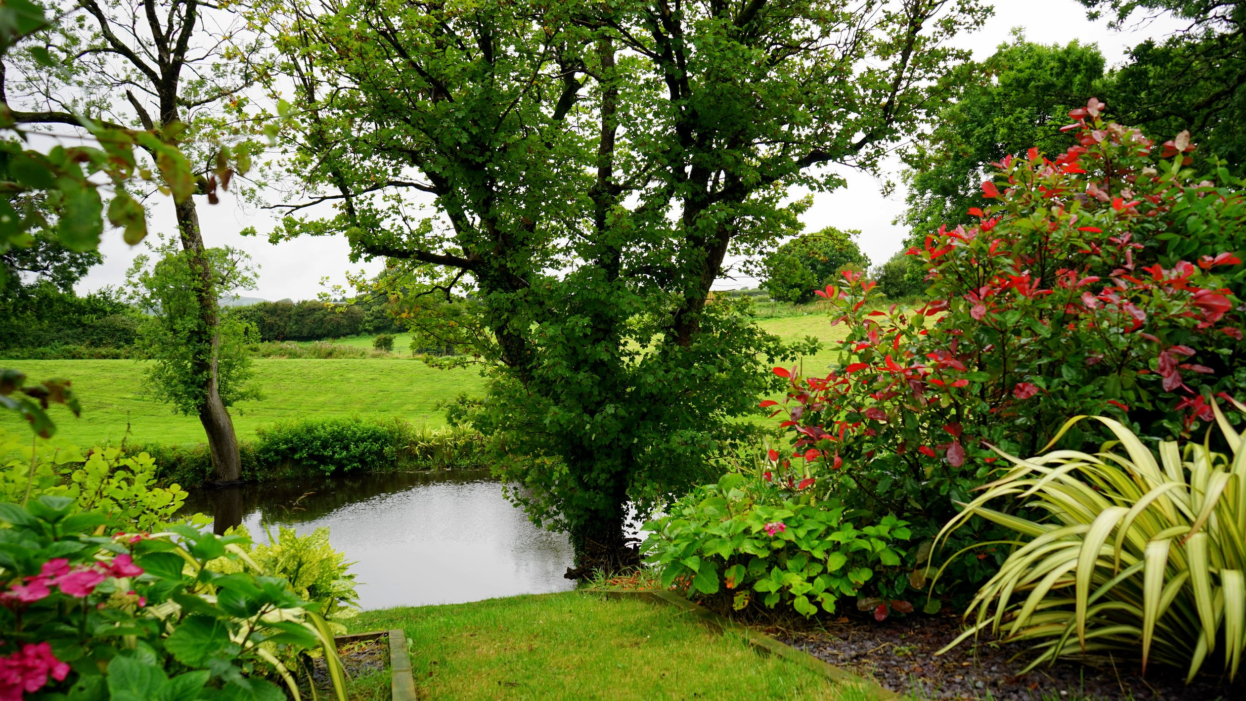 beautiful garden in back yard