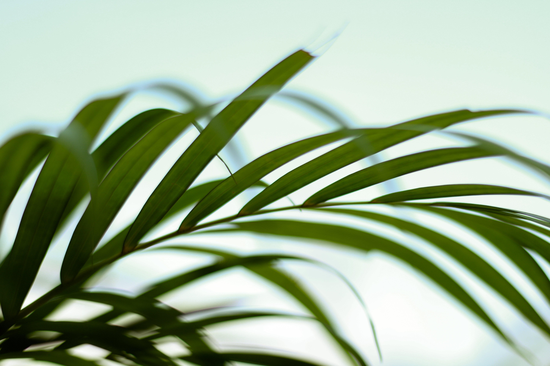 Free stock photo of autumn leaf, blurred background, blurry, blurry background