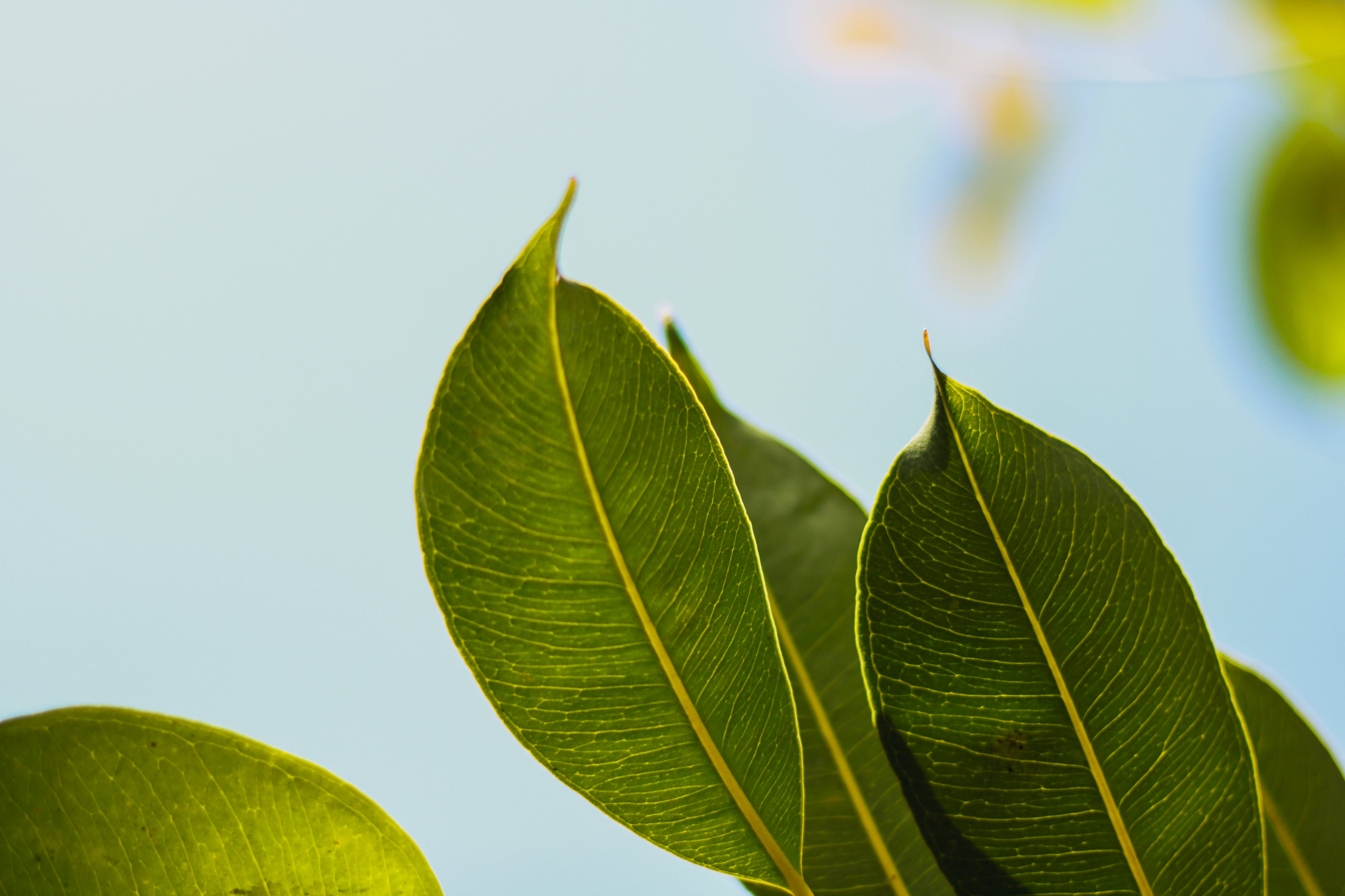 Selective Focus Photo of Green Leafed