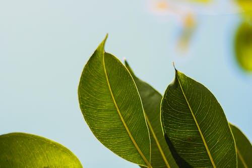 Foto stok gratis alam, alami, berfokus, buram