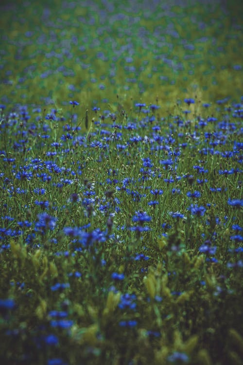 Gratis stockfoto met bloem, bloemen, close-up, daglicht