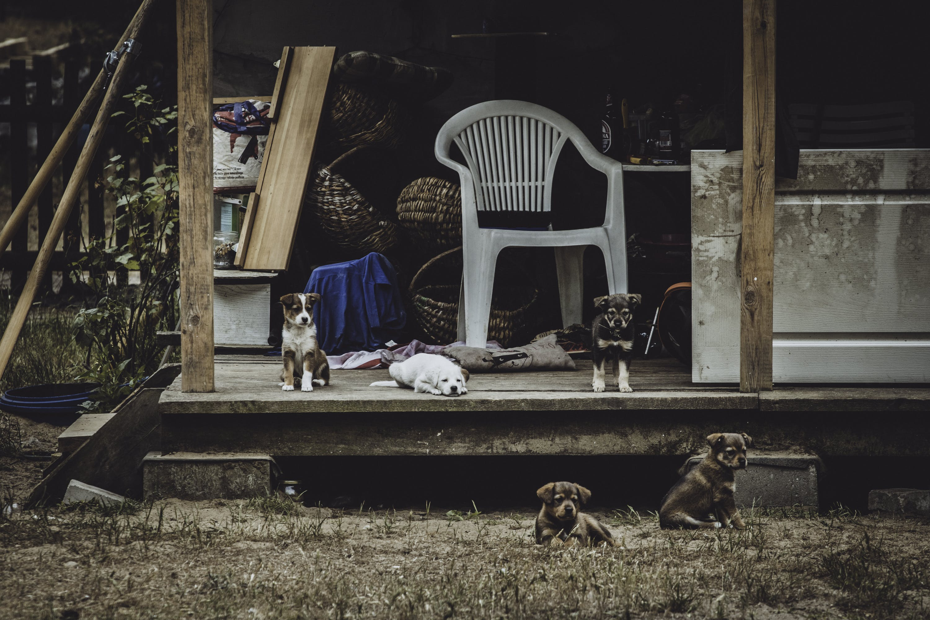 Puppies Beside White Armchair
